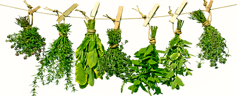 Herb Png -