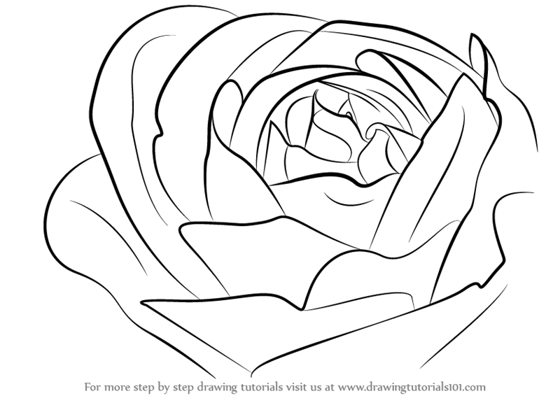 How To Draw A Rose Png -