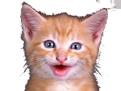 Laughing Cat Png -