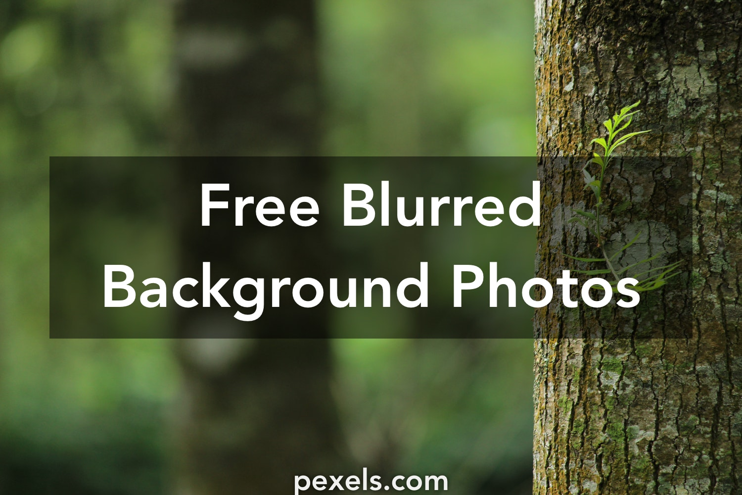 Blurred Nature Background Png Free Blurred Nature Background Png Transparent Images 67014 Pngio