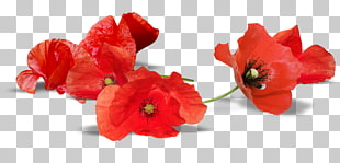 Armistice Day Png - 107 Armistice Day PNG cliparts for free download | UIHere