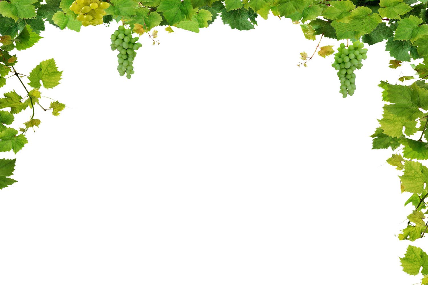Wine Png Borders - 1500x1000px Wine and Grapes Wallpaper Border - WallpaperSafari