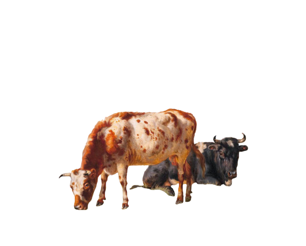 Grazing Cow Png - 1800's Grazing Cows PNG by chaseandlinda ...