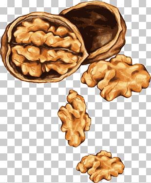 Walnut Sketch Png - 425 walnut Vector PNG cliparts for free download | UIHere