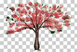 Silk Floss Tree Png - 5 silk Floss Tree PNG cliparts for free download | UIHere