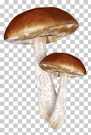 Clitocybe Nuda Png - 6 clitocybe Nuda PNG cliparts for free download | UIHere