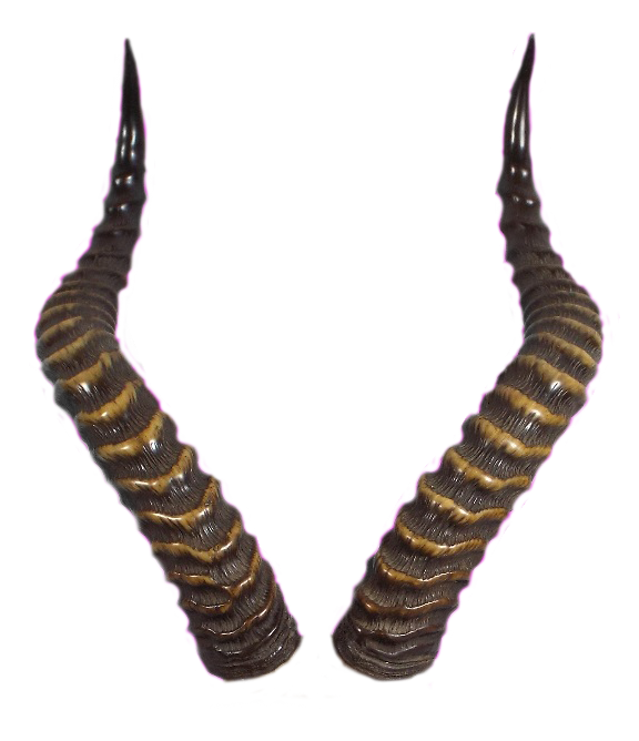 Horns Png - 723 Horns 01 by Tigers-stock on DeviantArt