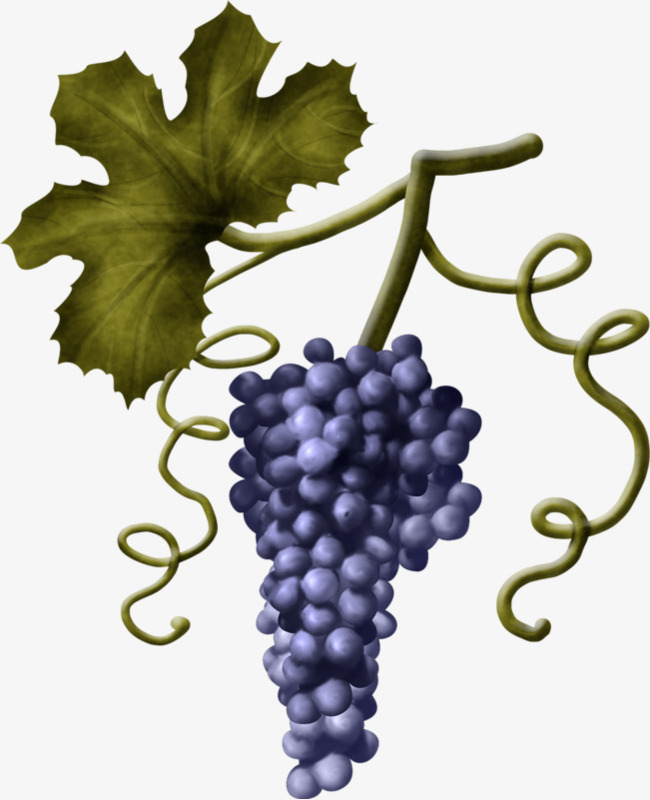 Bunch Of Grapes Png - A Bunch Of Grapes, Grape, Vine, Fruit PNG Image and Clipart for ...