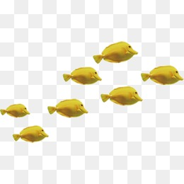 Group Of Fish Png Free Group Of Fish Png Transparent Images 5653 Pngio