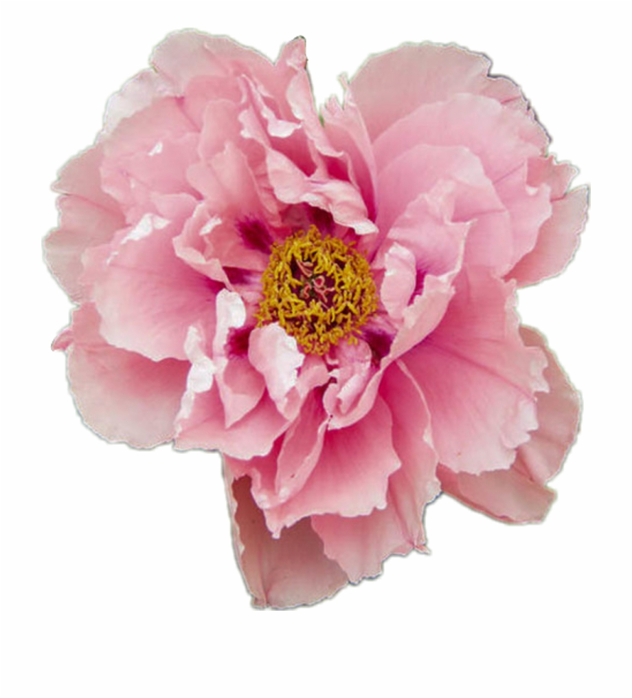 Aesthetic Tumblr Flower Png 259587 1164428 Png Images Pngio