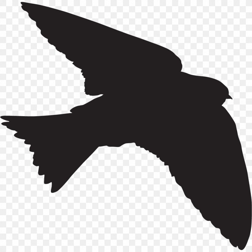 American Cliff Swallow Png - All About Birds American Cliff Swallow Cornell Lab Of Ornithology ...