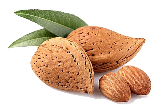 Almond Png - Almond PNG