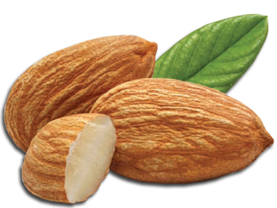 Almond Png - Almond PNG Picture