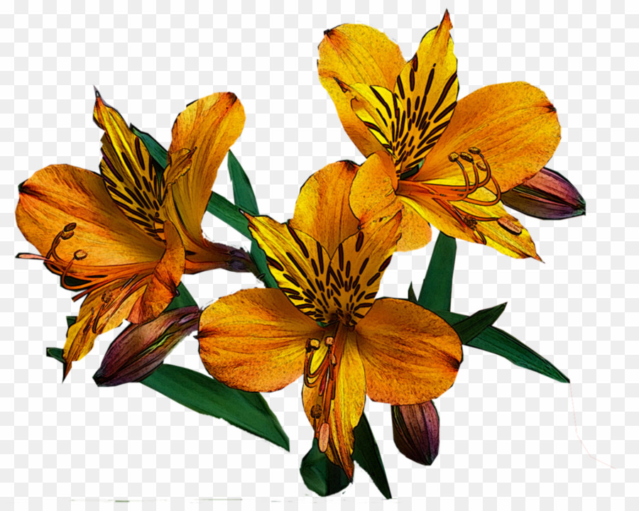 Alstroemeria Png Peruvian Lily Clipart D 1351544 Png Images Pngio