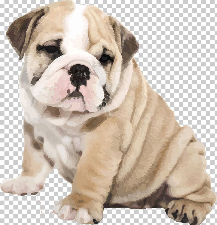 Old English Bulldog Png - American Bulldog Old English Bulldog IPhone 6S Puppy PNG, Clipart ...