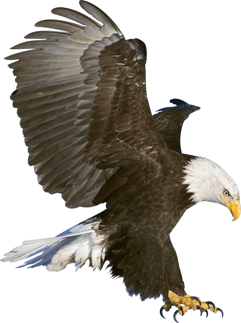 Picture Of Eagle Png - animals · birds · eagles