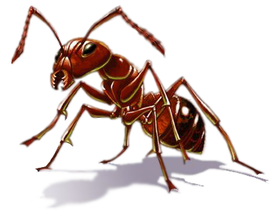 Ants Png - ant PNG