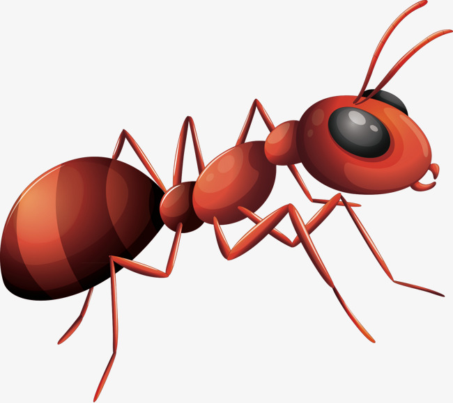 Ants Png - ants vector, Ant, Decorative Ant, Material PNG and Vector