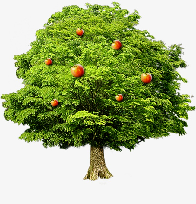 Apple Tree Png Free Use - Apple Tree, Tree Clipart, Apple PNG Image and Clipart for Free ...