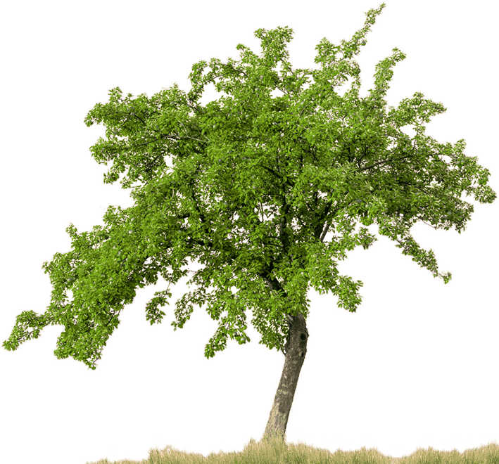 Apple Tree Png Free Use - Apple trees background png library download png - RR collections