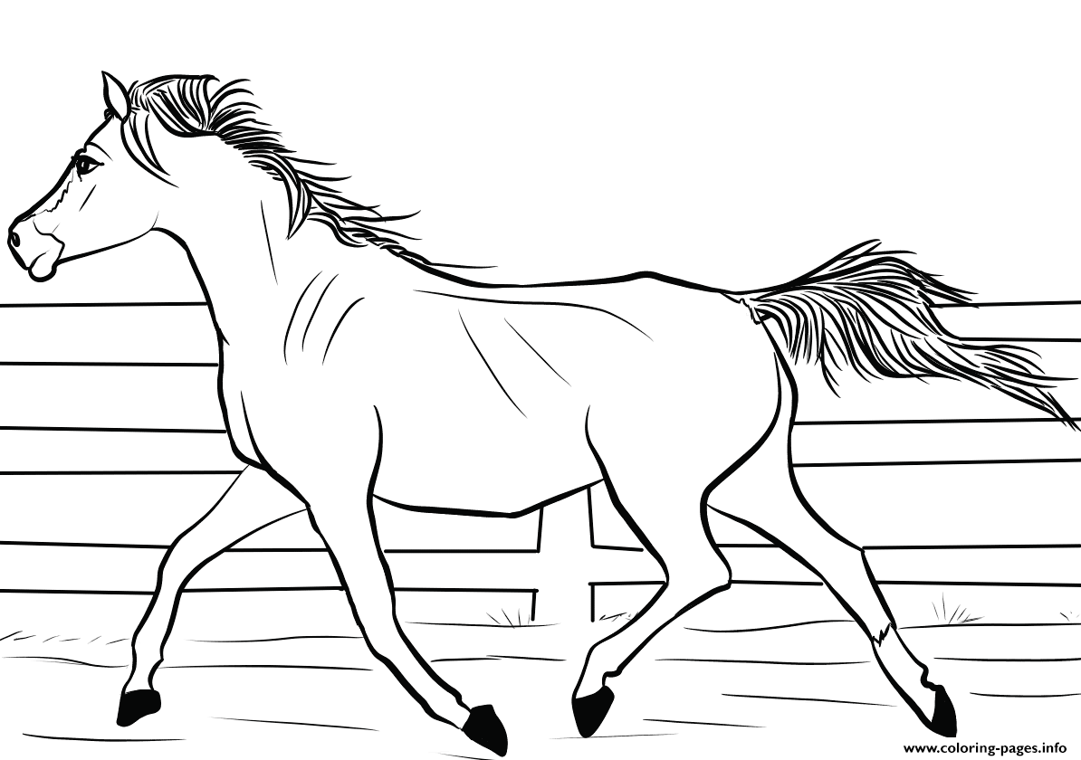 - Arab Horse Coloring Pages Printable #1556052 - PNG Images - PNGio