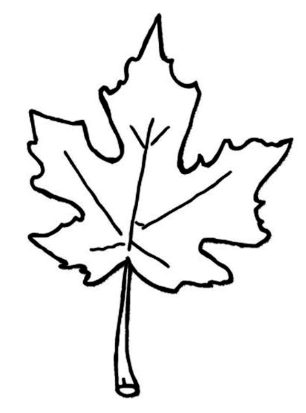 Large Fall Leaves Coloring Pages Printable Tag: 28 Stunning Fall ...   600x445