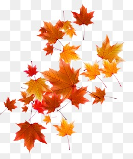 Free Fall Png - autumn leaves, Fall, Defoliation, Autumn PNG and Vector