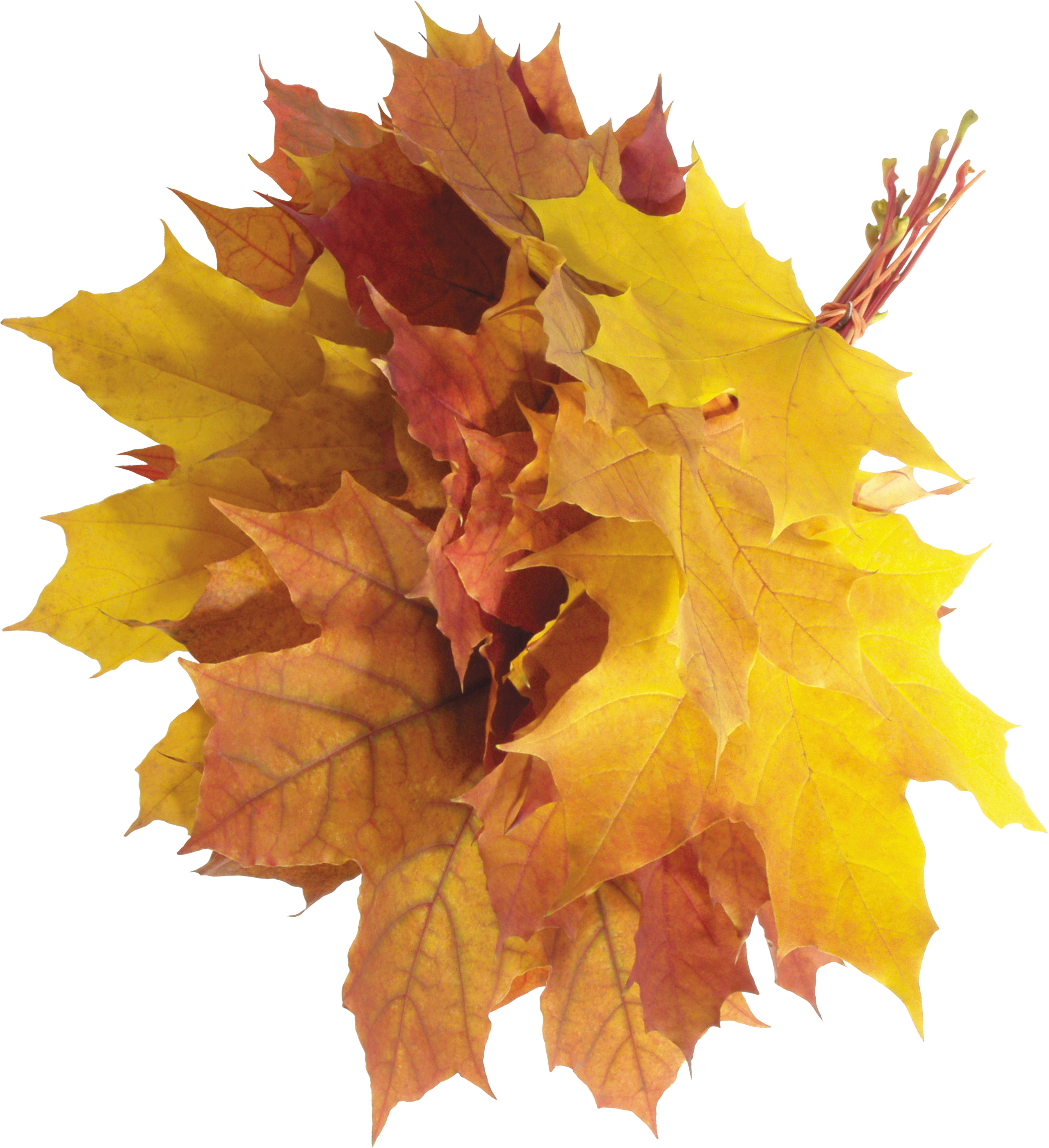 Free Fall Png - autumn PNG leaves