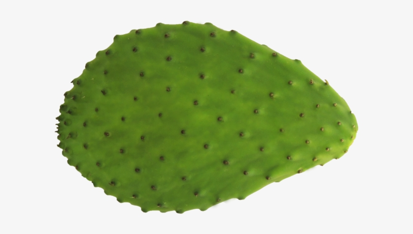 Prickly Pear Png - Barbary fig,Nopal,Green,Cactus,Fruit,Plant,Prickly pear,Annona ...