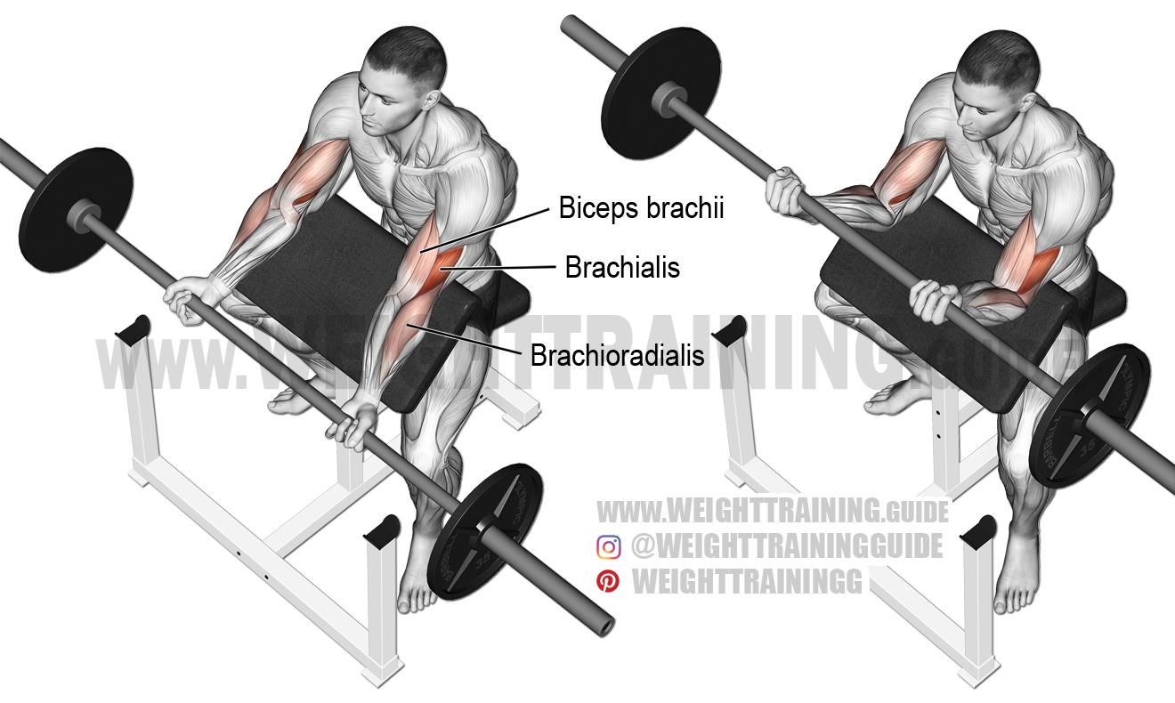 Barbell Curl Png - Barbell preacher curl exericse instructions and video | Weight ...