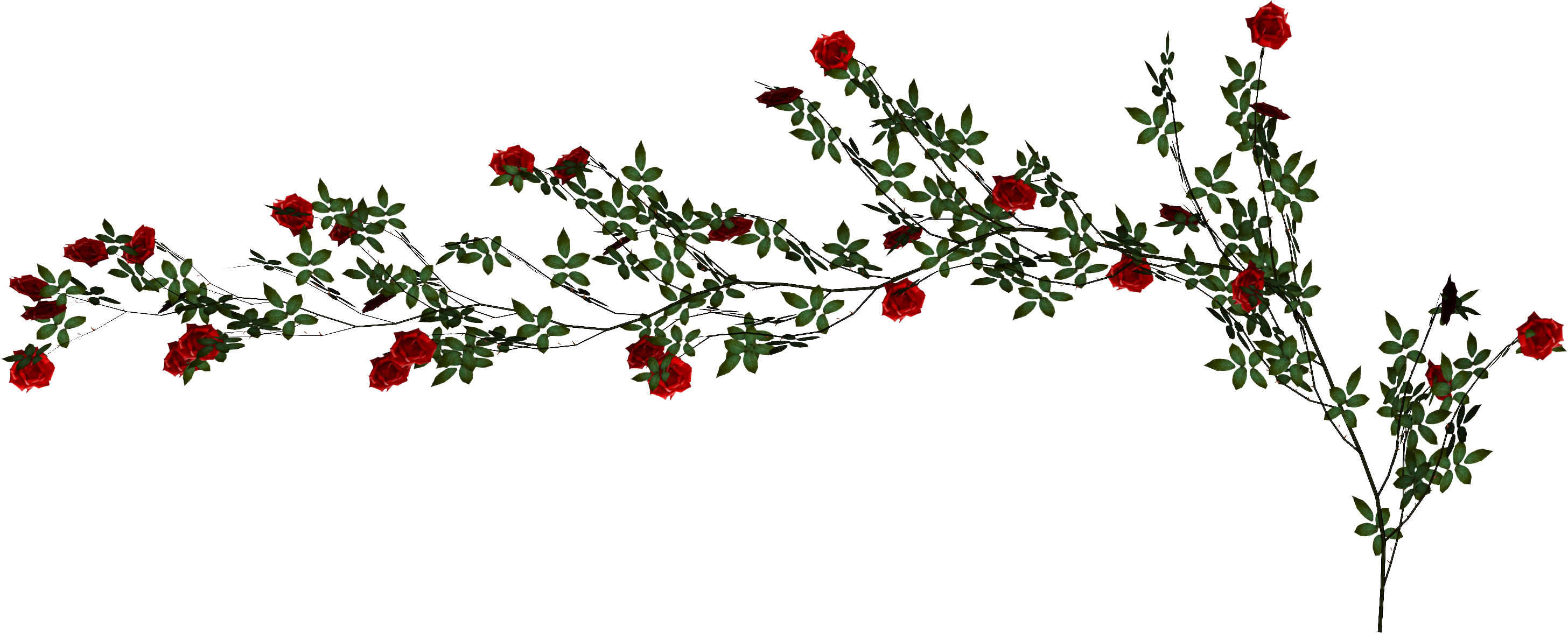Holly Vine Png & Free Holly Vine.png Transparent Images ...