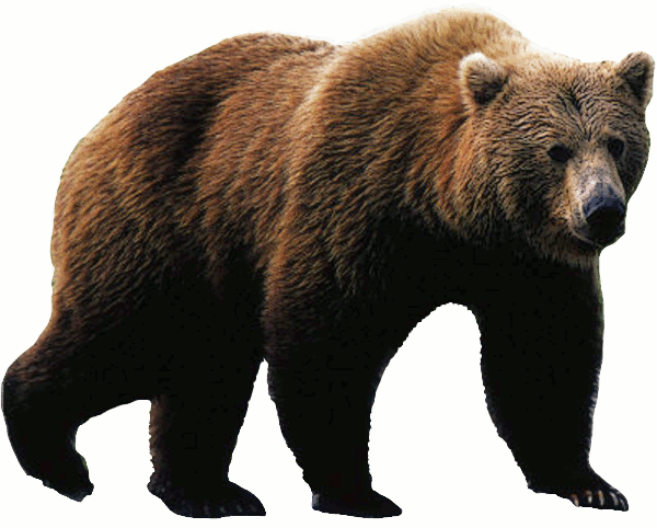 Bears Png Without Background - bear PNG