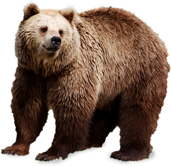 Bears Png Without Background - bear PNG image