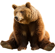 Bear Png - Bear PNG Images On this site you can download free Bear PNG image with  transparent background