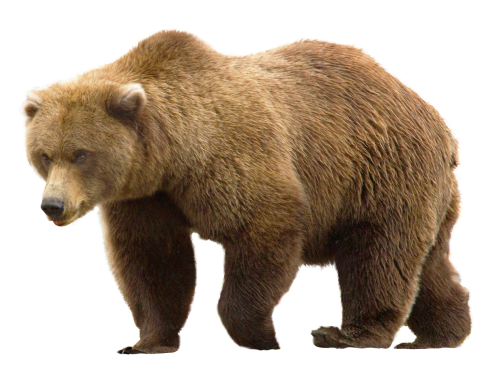 Bear Png - Bear PNG Transparent Image