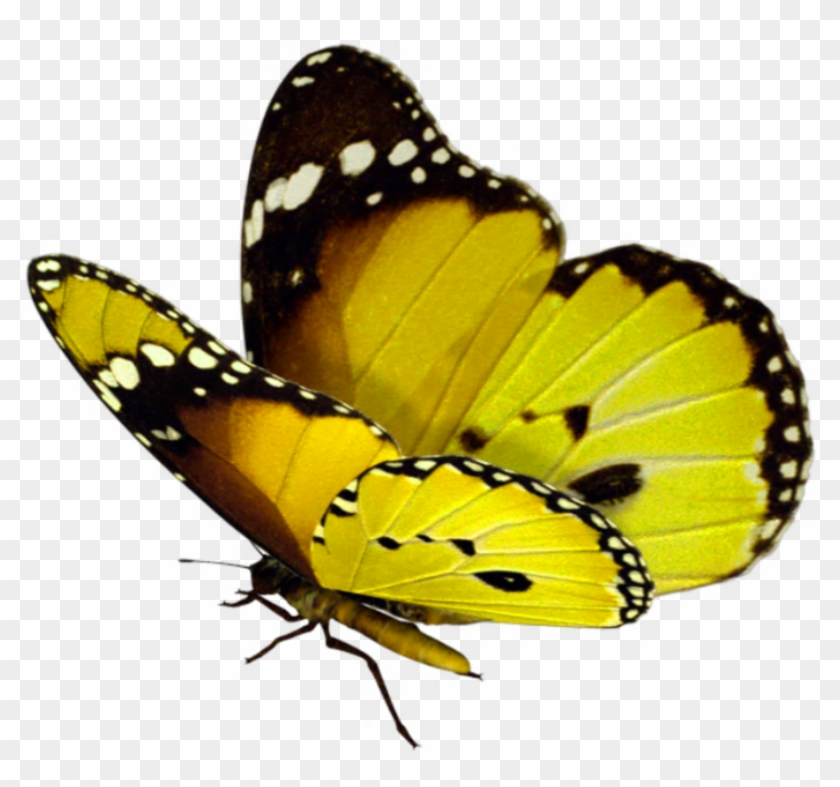 Butterfly Transparent Background - Beautiful Butterfly Png - Butterfly Flying Png Transparent ...