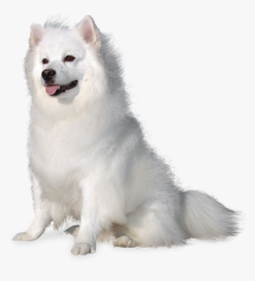 Cute Puppy Easy Png - beautiful #white #fluffy #puppy #dog #cute #animal - American ...