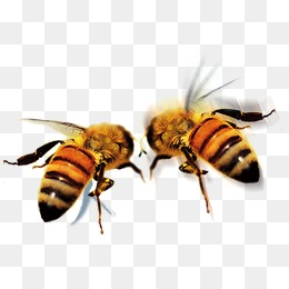 Bee Png - bee, Bee, Fly, Animal PNG and PSD
