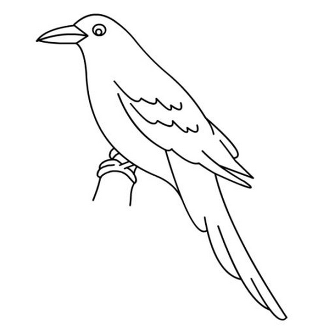 Coloring Pages For Birds | 652x612