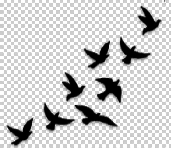 Bird Silhouette Tattoo Png Free Bird Silhouette Tattoo Png Transparent Images 64958 Pngio