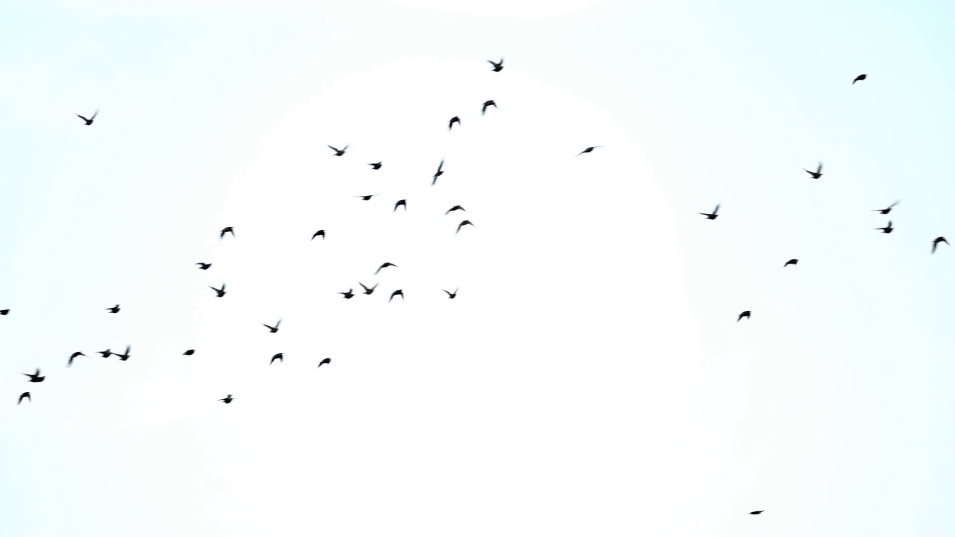 Sky Bird Png - Birds flying in the sky png 4 » PNG Image