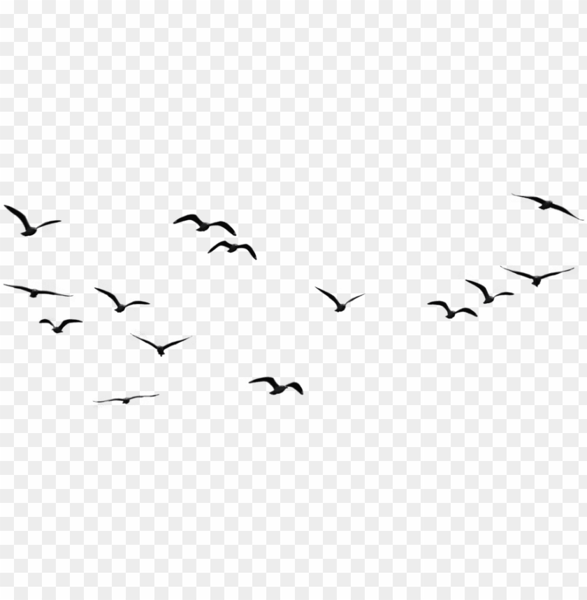 Sky Bird Png - birds flying in the sky PNG image with transparent background | TOPpng