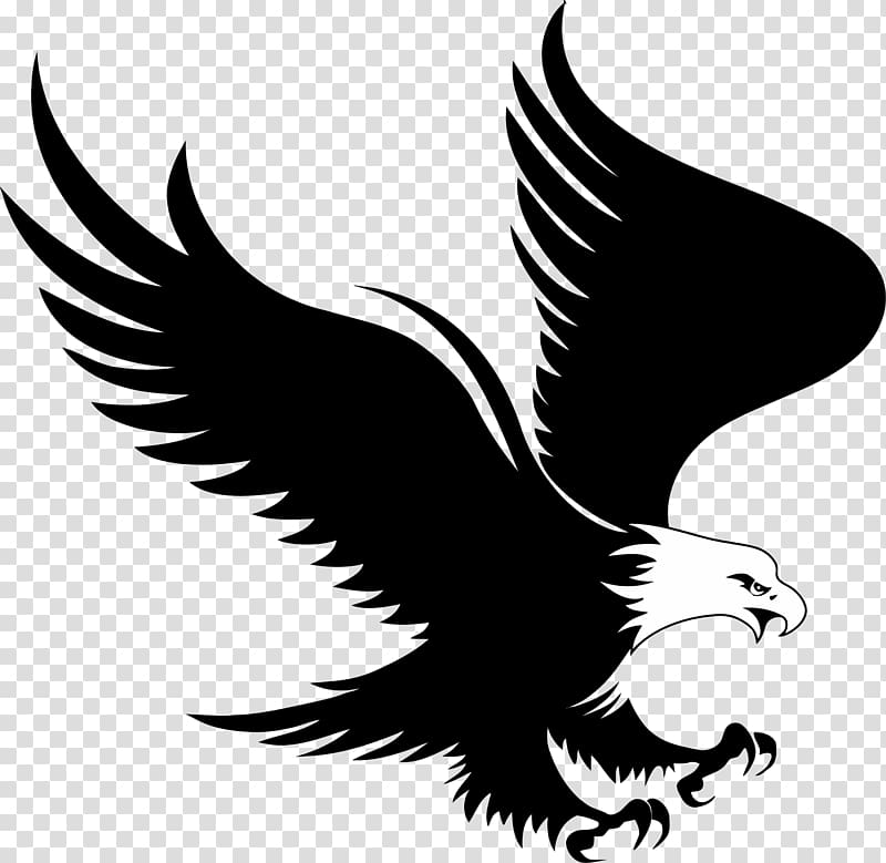 Black And White Eagle Illustration Bald 2407839 Png Images Pngio