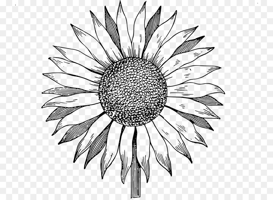 Sunflower Black And White Png - Black And White Flower png download - 800*655 - Free Transparent ...
