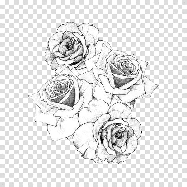 Rose Sketch Png - BLACK AND WHITE S, roses sketch transparent background PNG clipart ...