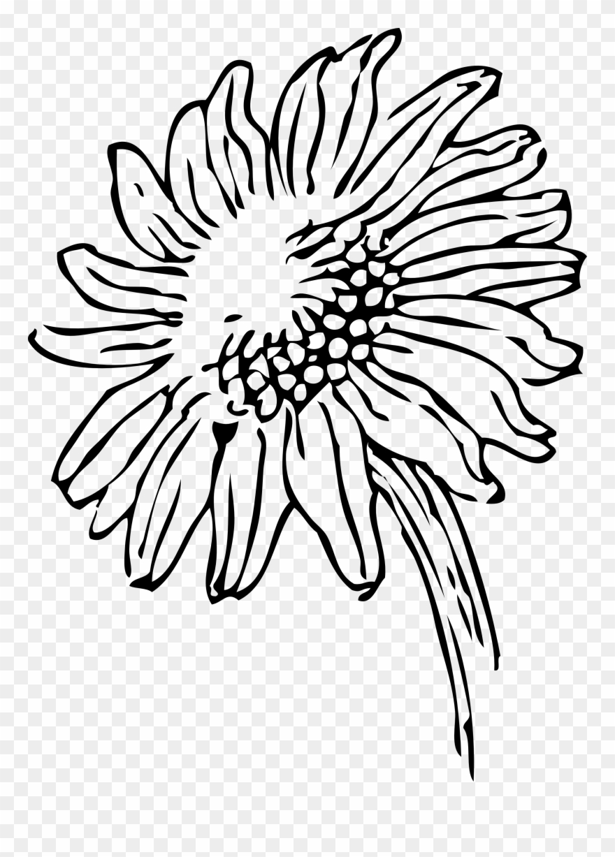 Sunflower Black And White Png - Black And White Sunflower Clipart - Sunflower Clipart Black And ...