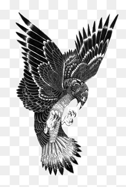 Hawk Png Black And White - Black Hawk Png, Vectors, PSD, and Clipart for Free Download | Pngtree