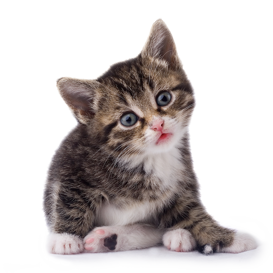 Cat Png - Black & White Cat PNG PNG Image - PurePNG | Free transparent CC0 PNG Image  Library