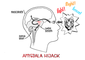 Amygdala Hijack Png - Blog Archives - COGNITIVE BEHAVIORAL THERAPY IN SAN FRANCISCO AND ...