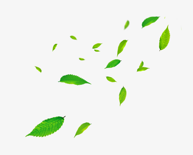 Leaves Blowing Png Free Leaves Blowing Png Transparent Images 51159 Pngio